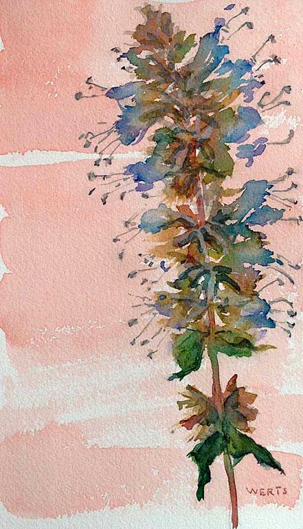 Pressed Flowers #1 10x6 wc $250 uf $345 fr