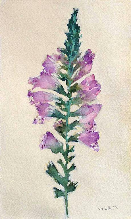 Pressed Flowers #2 10x6 wc $250 uf $345 fr