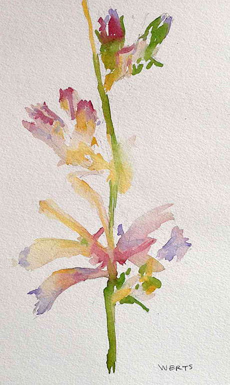 Pressed Flowers #5 10x6 wc $250 uf $345 fr
