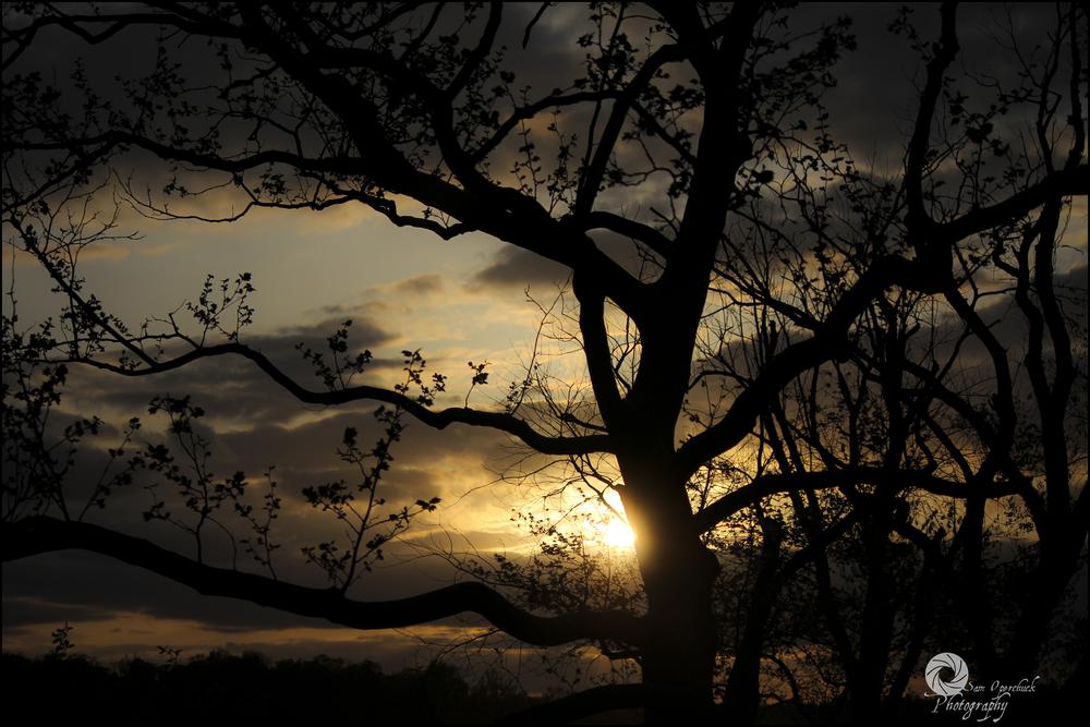 Sunset_Annap2WM.jpg