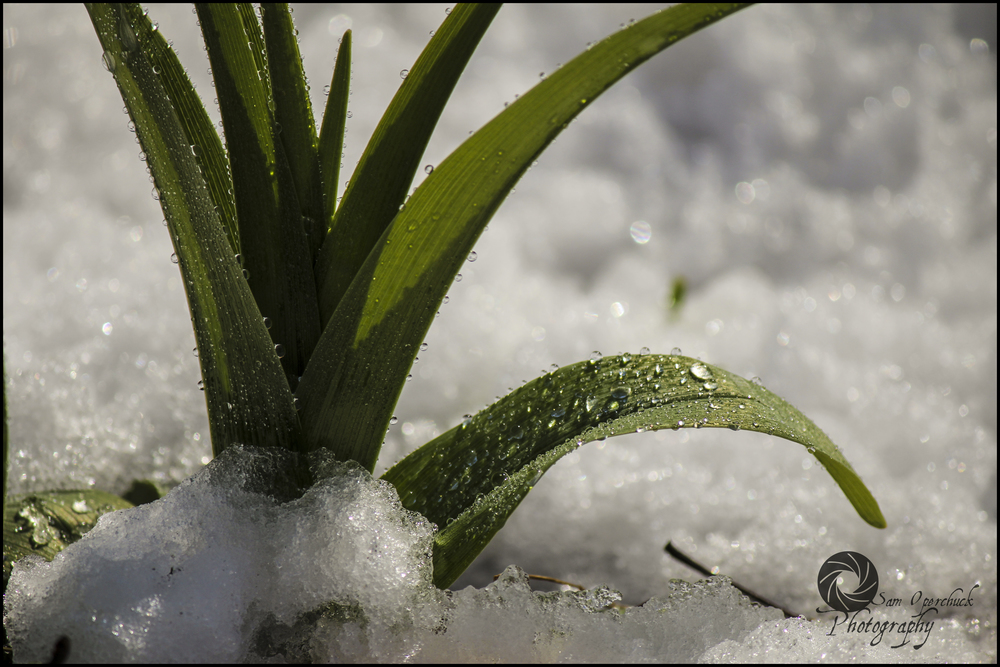 PlantDrops1WM.jpg