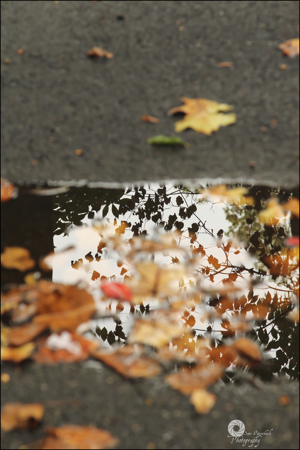 puddleleaves1WM.jpg