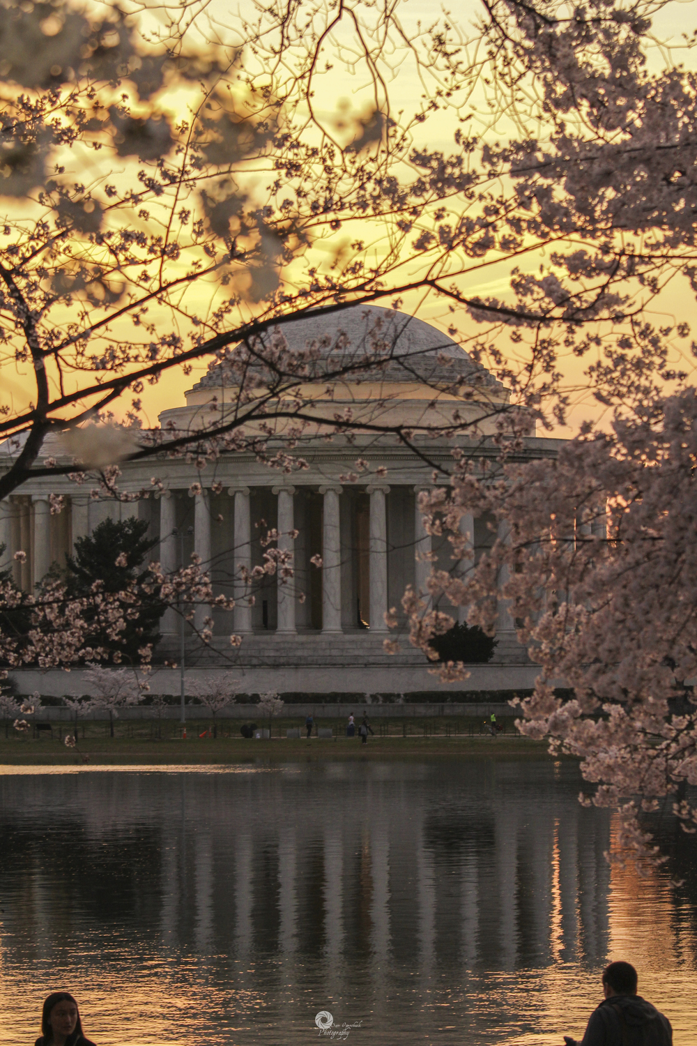 CherryBlossoms2014-1WM.jpg