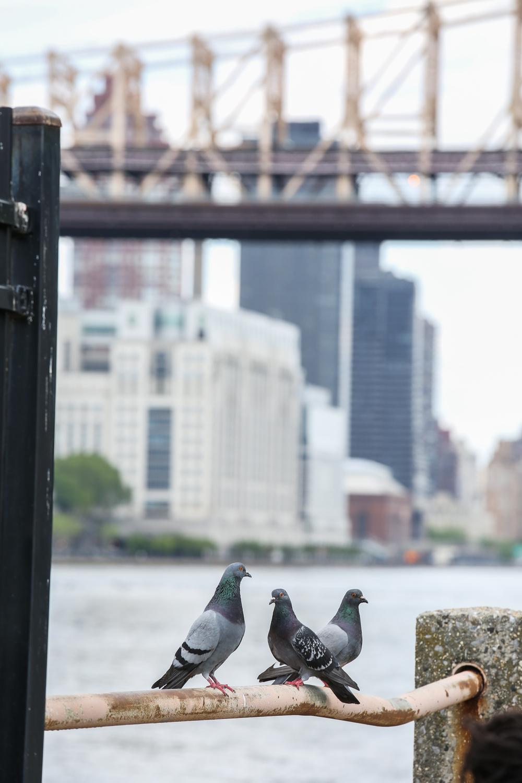 NYC2015schaeffer-103.jpg