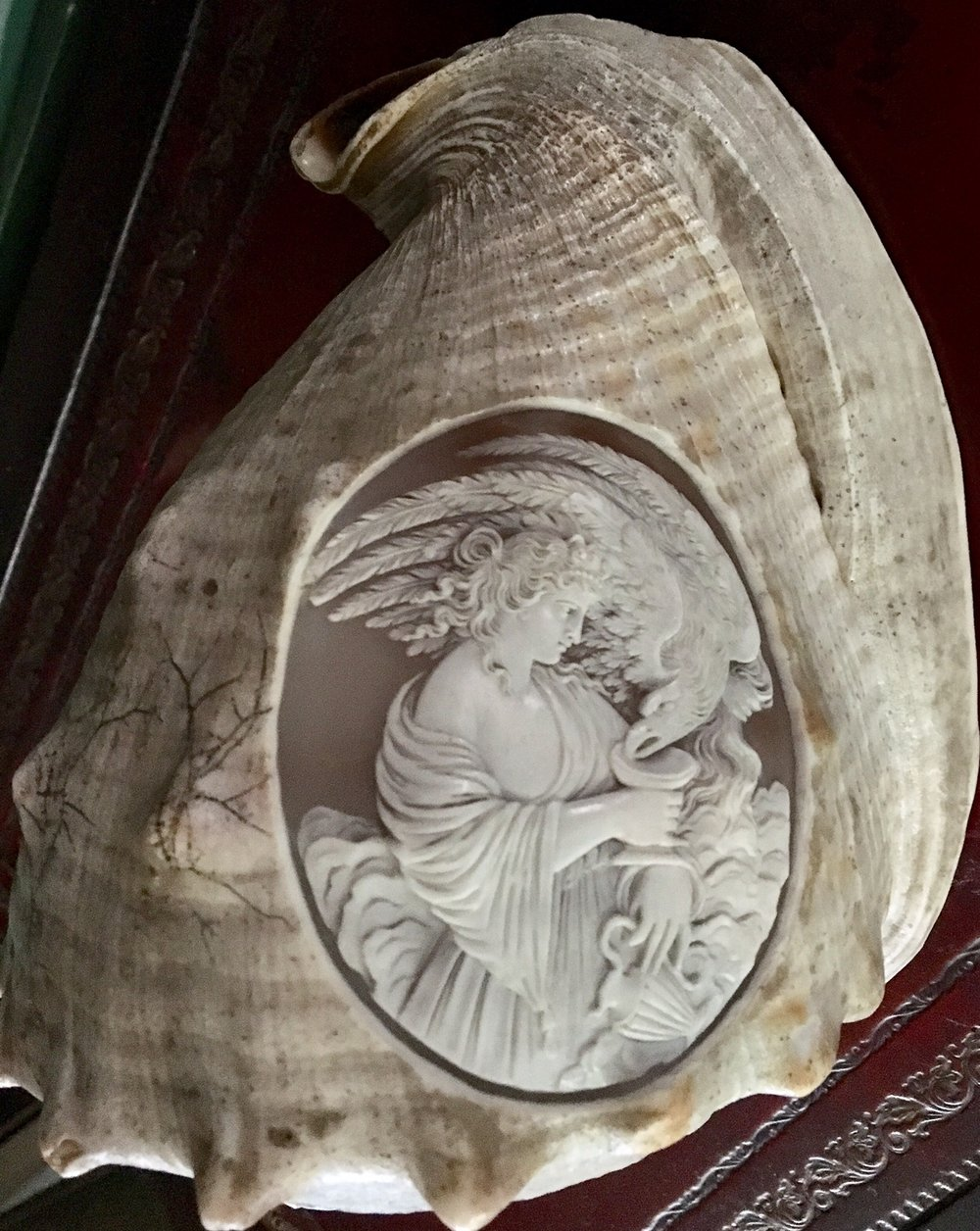 Carved conch shell.jpg