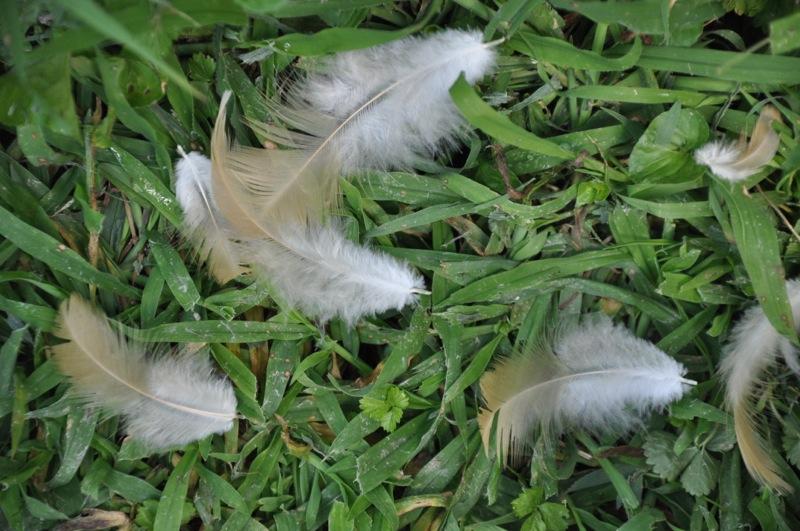 chickens201206.jpg
