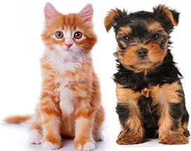 I love providing in-home pet care for dogs & cats. As an experienced Veterinary Technician, I also have seven years of experience working at local animal shelters as well as veterinary clinics.