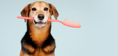 dogbrush.jpg