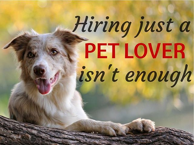 Traveling this summer and need someone to watch your pets in your home? With so many new apps advertising pet sitters and dog walkers with profiles of people who LOVE pets and are looking to earn extra cash, who can pet owners trust? If you want the best care for your best friend, don't just hire a pet lover—hire a pet-care PROFESSIONAL. Hannah, with I Love Your Pet, LLC has extensive veterinary experience and has been pet sitting for over 7 years. Contact me today to book your first FREE consultation and future pet care services! Current clients: REFER a friend that books services, and receive $5 off your next invoice!