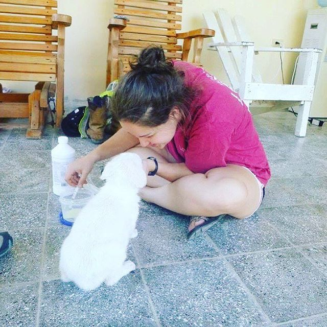 I'll be sending out sponsor letters soon for our trip to Honduras with Christian Veterinary Mission. If you're a client, let me know and I will send you a letter personally! In March of 2018 we have the opportunity to spend 2wks there doing what I love: spay/neuter, educating owners on pet care, deworming some cute puppies like this one and spending time in the mountains of the Agalta Valley. If you would like to donate towards my trip, link is in my bio! #christianveterinarymission