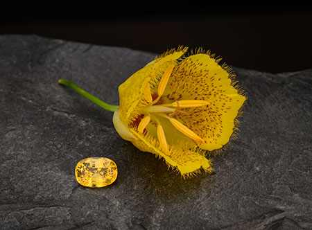 Not a mellow yellow. The 6.40-carat yellow sapphire from Sri Lanka rests next to a mountain lily taken from the hills of Pala International's Mountain Lily Mine. (Photo: Mia Dixon)