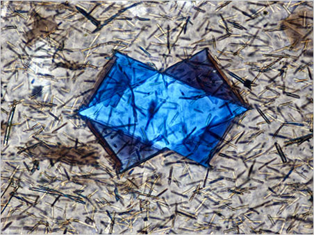 Crystal within Obsidian:  Polarized light was used to reveal the twinned structure of this unidentified crystal in obsidian. Photomicrograph by Nathan Renfro; field of view 0.25mm.