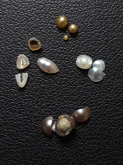 Mexican natural pearls (Pteria sterna) were broken to find out if any trace remains of what started them up—the origin of pearls, there is no way to call this one with a couple of words in good old English….