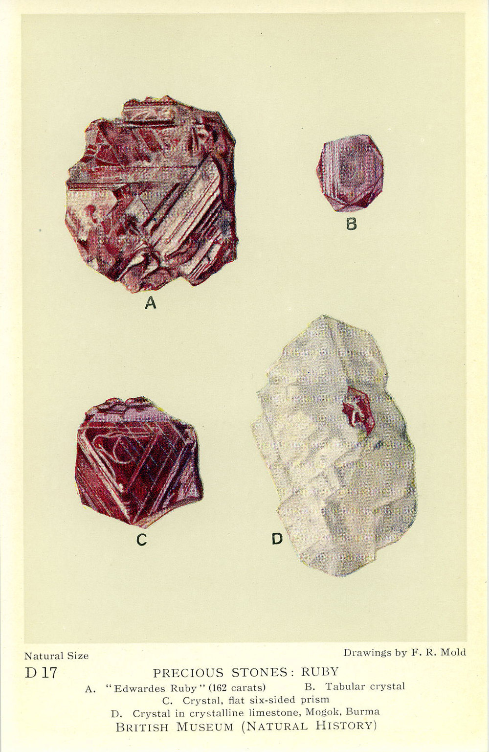 With all the excitement about spinel being added as a new August birthstone, let's not forget that ruby is July's. This card is notable because it does not feature any faceted material. A gap in the institution's holdings, perhaps?