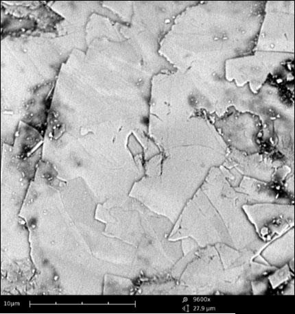 Photomicrograph