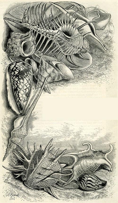 Sea-shells.