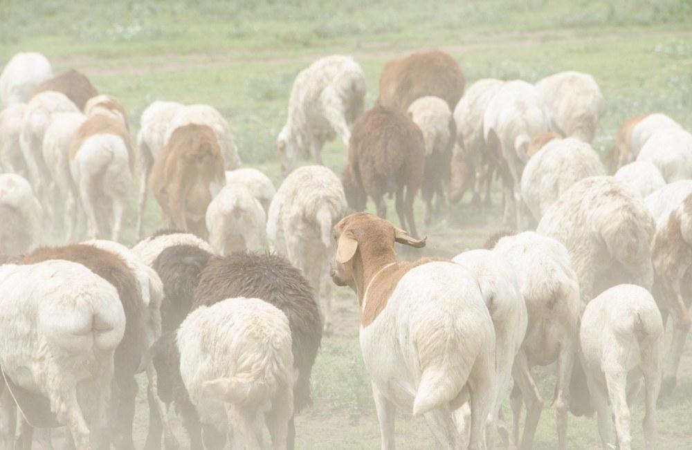 Maasai8.jpg