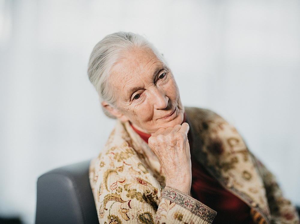 Jane Goodall poses for a photograph prior to an interview with the Toronto Star to look back on her research with chimpanzees. - The Toronto Star