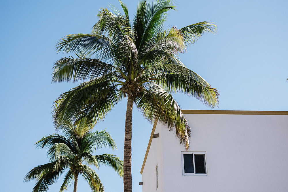 destination-wedding-cabo-san-lucas-ventanas-private-residence-alternative-toronto-wedding-photographer-details-palm-trees-getting-ready.jpg