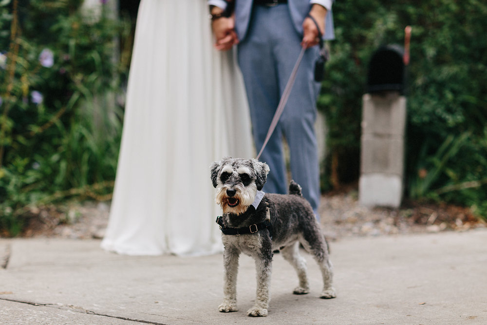 Toronto-Island-Wedding-Toronto-Best-Film-Wedding-Photographers-3b-photography-analog-photography-wards-island-clubhouse-junebug-weddings-vintage-venue-reception-couples-portraits-with-terrier-dog-otto-at-old-toronto-island-home-vintage-rustic.jpg