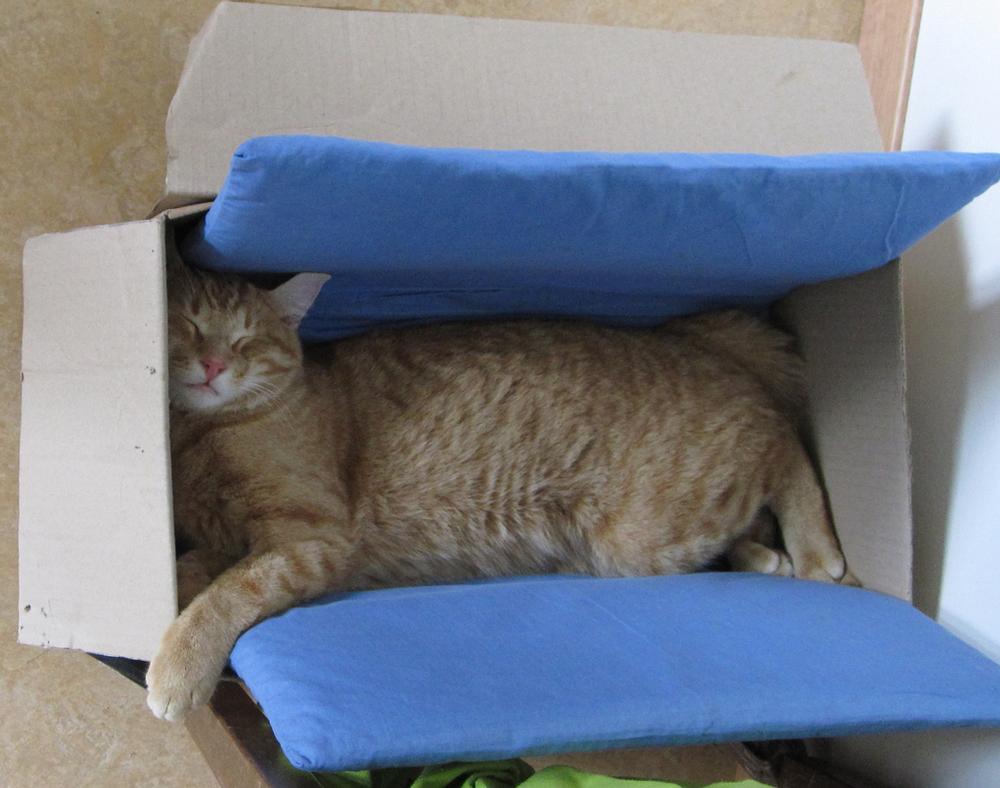 Sidi in der Kiste