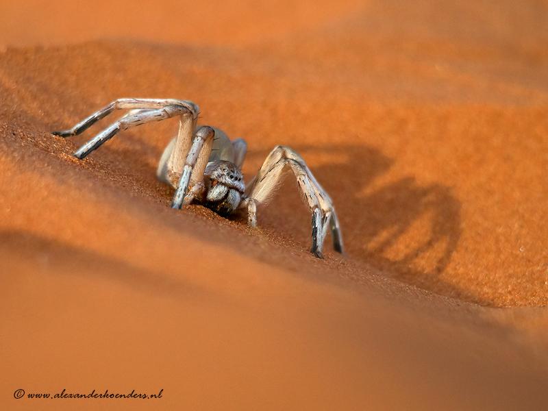 Wheel spider
