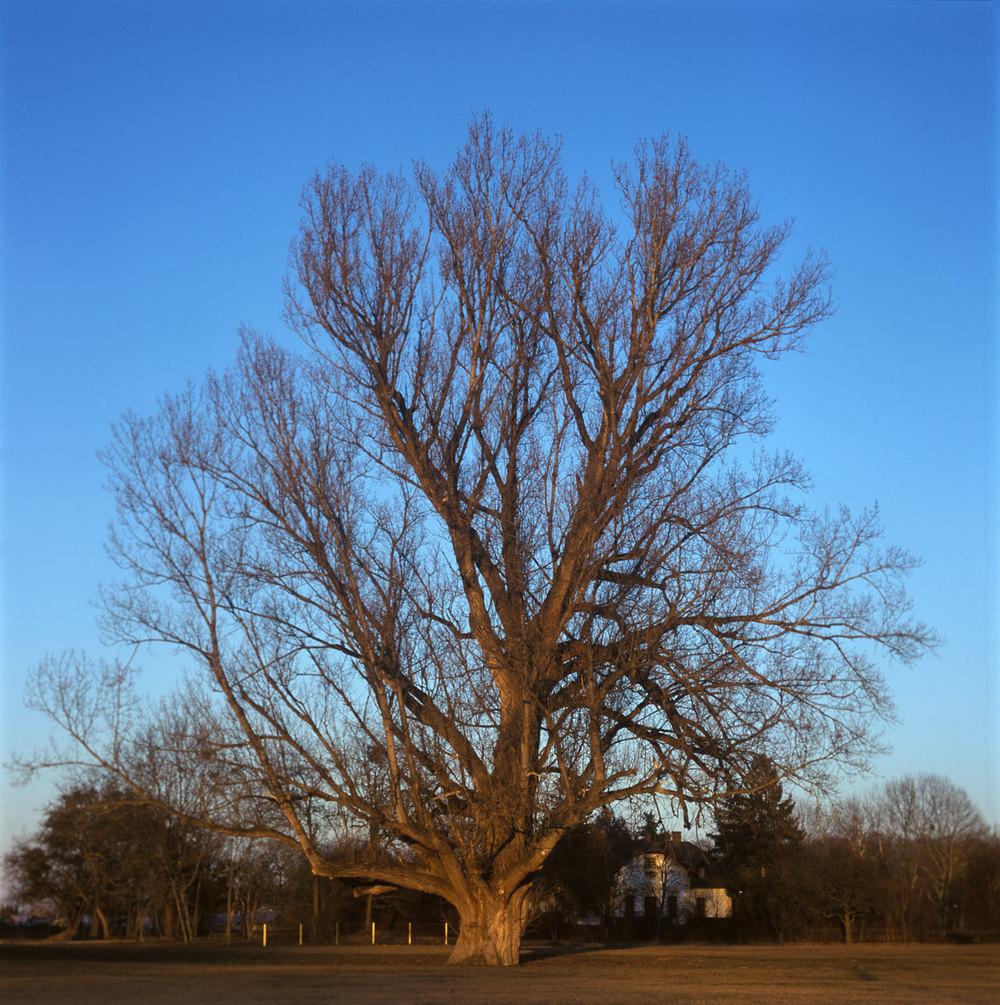 savar_tree.jpg