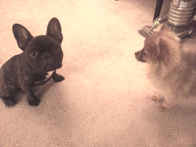 First meeting. Blanka = not thrilled.