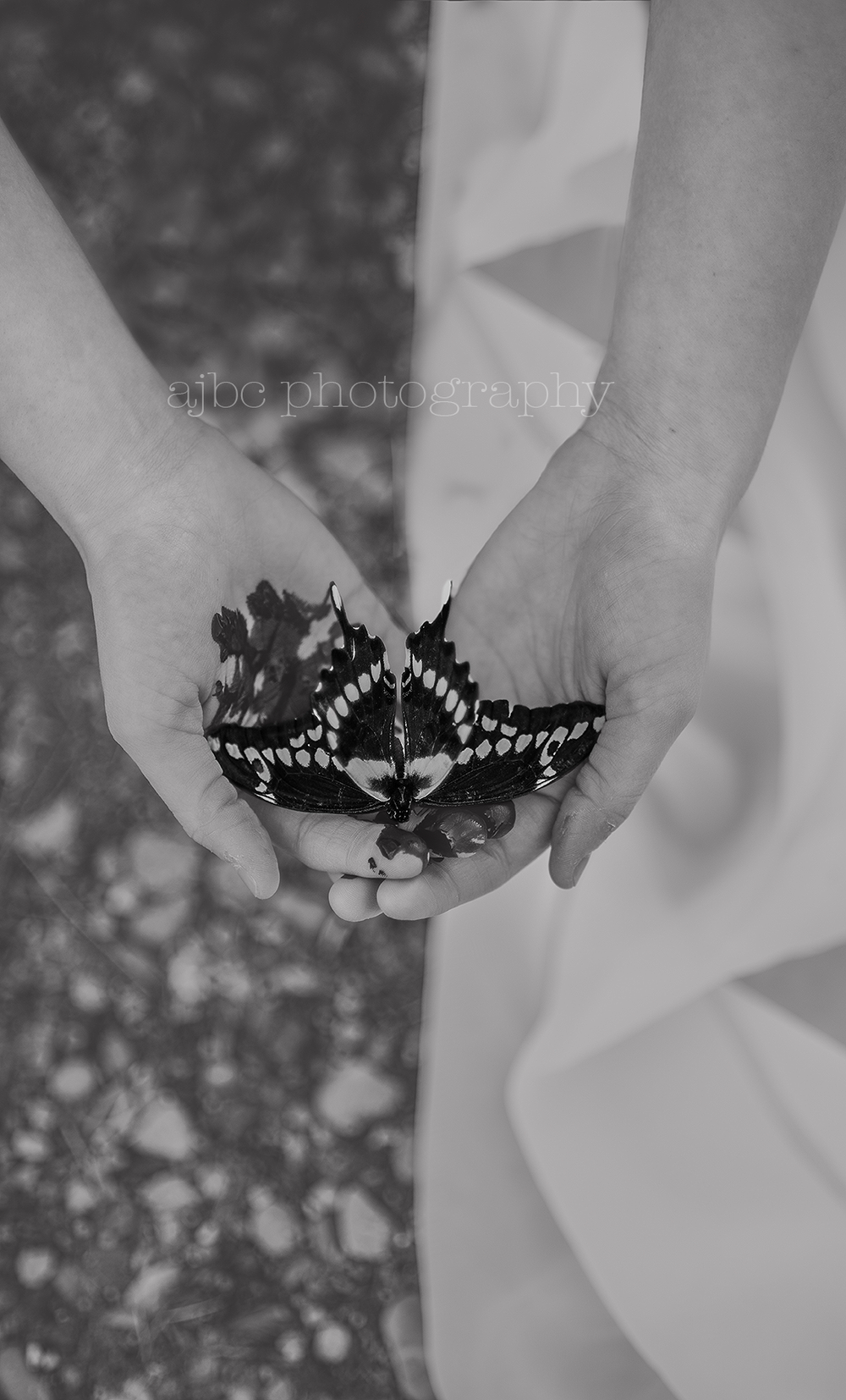 AJBCPhotography-artistic-porthuron-photographer-michigan-blackandwhite-butterfly