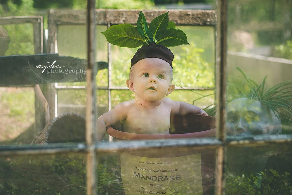 baby mandrake session.jpg
