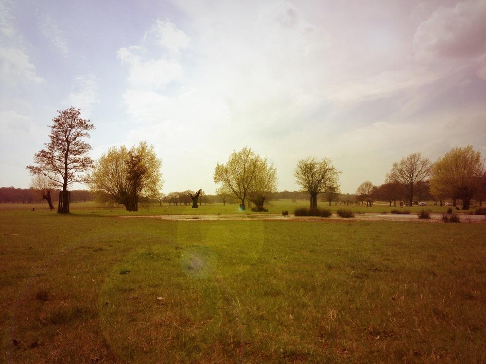 Richmond Park 2.JPG