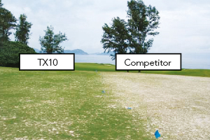 Grow-in trial: By week 7 of the grow-in trial, TX10 shows a superior % coverage and colour index.