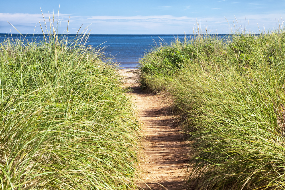 bigstock-Sandy-path-to-the-beach-over-s-32890925.jpg