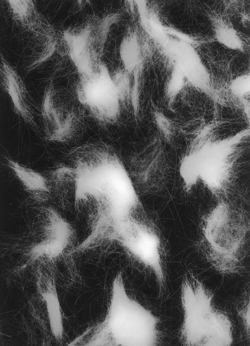 cat hair photogram website.jpg