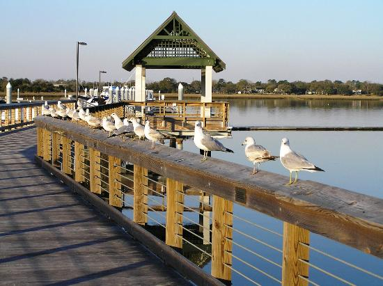 Beautiful gulls all lined in a row....photo courtesy of tripadvisor.com