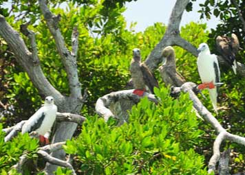Bird-watching-los-roques.jpg