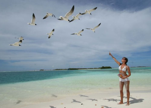 Bird-watching-los-roques-1.jpg