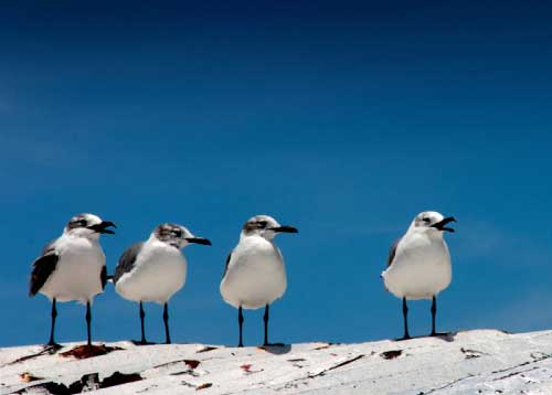 Bird-watching-losroques-1.jpg