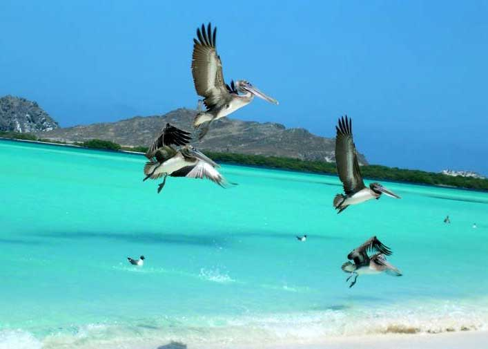 losroques-Bird-watching.jpg
