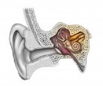 Inner Ear.jpg