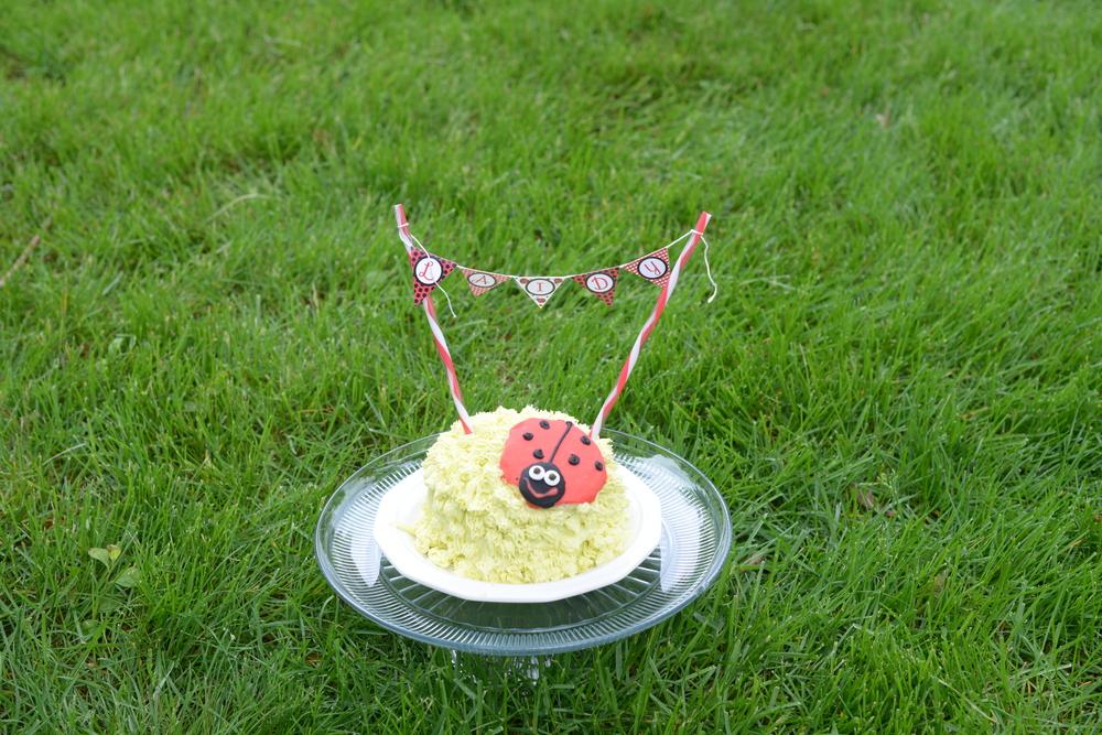 Ladybug party cake