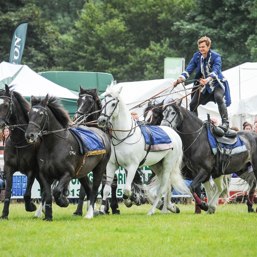 herts-show-Atkinson-Action-Horses-5-1000x1000.jpg
