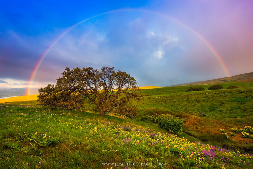 Chasing Rainbows, Dalles Mountain, Oregon
