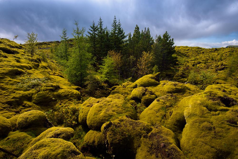 Mordor,Laufskalavarda Lava Fields, Iceland
