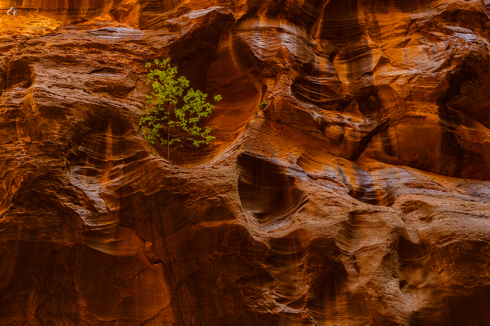 Give Me Shelter, Zion National Park, Utah