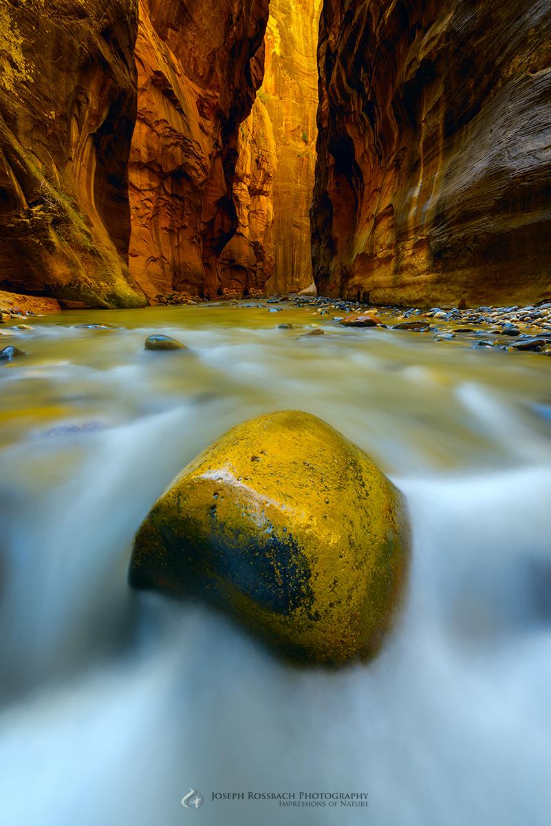 Golden, Virgin River Narrows, Zion National Park, Utah