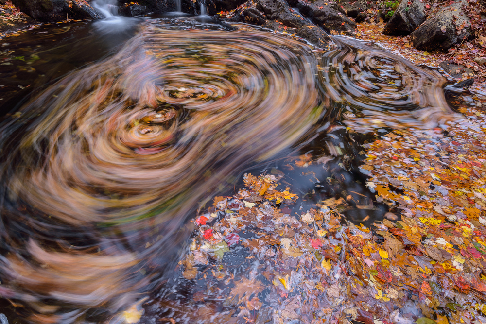 Swirling Leves on Duck Brook, Acadia National Park, Maine