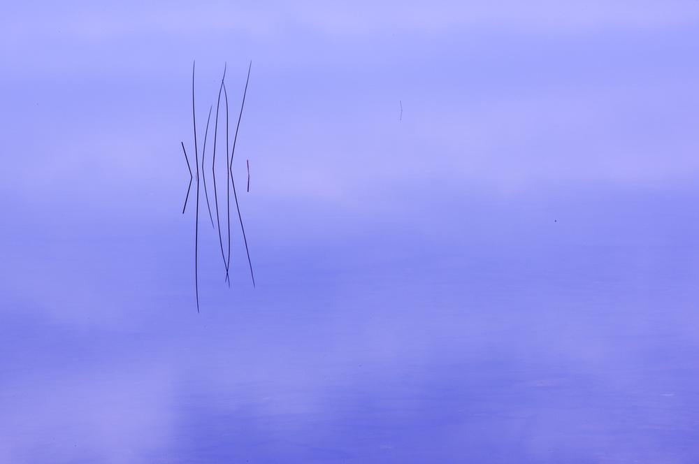 Reeds, Bubble Pond, Acadia National Park, Maine
