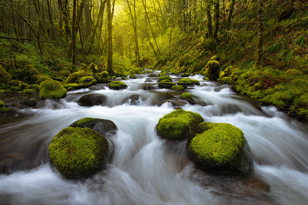 Gorton Creek, Columbia River Gorge