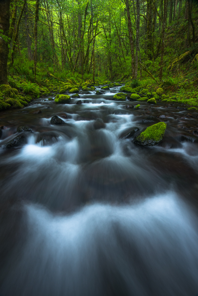 Rush, Rush, Gorton Creek, Columbia River Gorge, Oregon